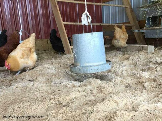 Sand = Happy Hens!